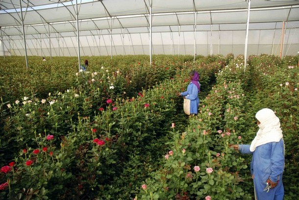 Flower farming business plan