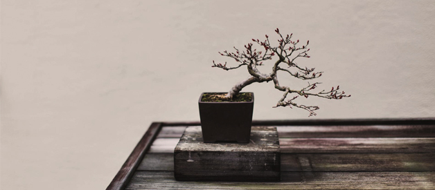 Top 10 Bonsai Tree Watering Cans in 2019
