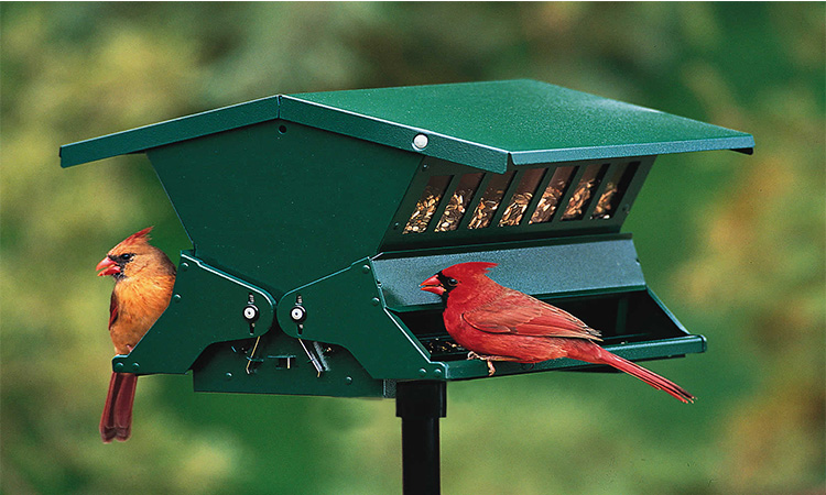Top 10 Squirrel Proof Bird Feeder In 2019
