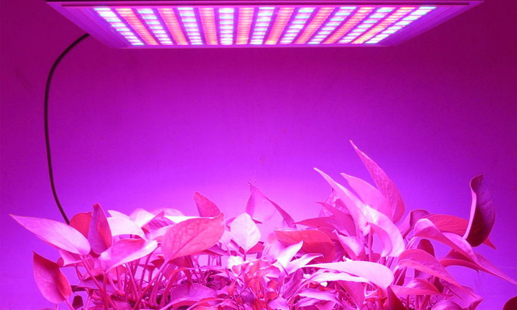 Top 10 LED Grow Light in 2019