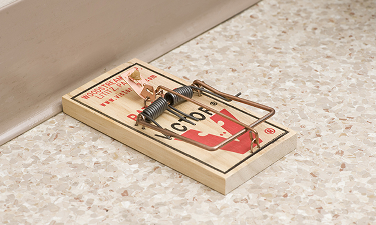 Best Mouse Traps | Highly Durable