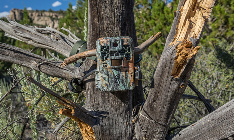 Best Trail Cameras | High Quality