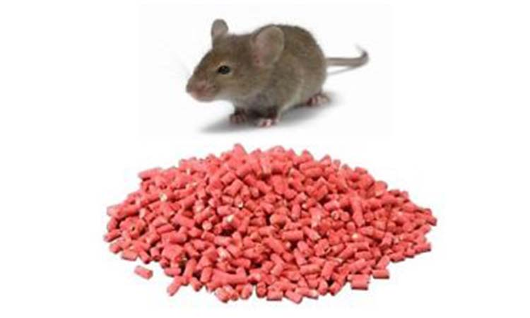Best Rat Poisons – What's It Made Of ?