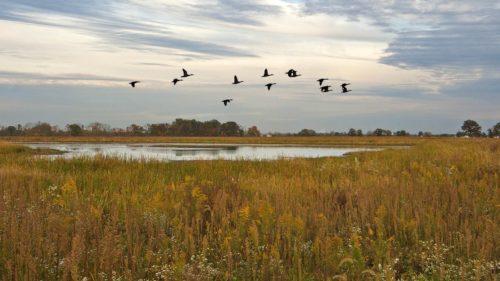 The Wet Prairie