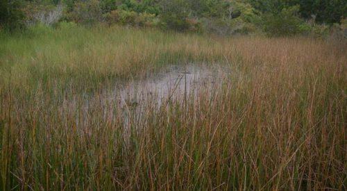 The Interdunal Swale - Types Of Wetlands