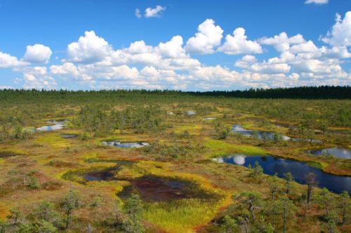 The Peatlands