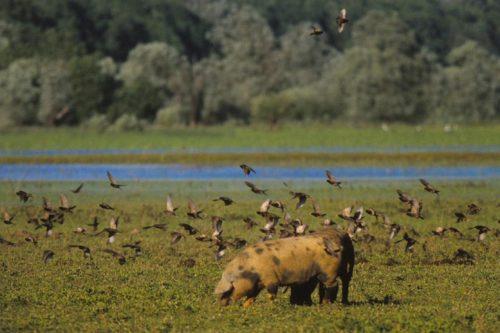 The Wet Meadow - Types Of Wetlands