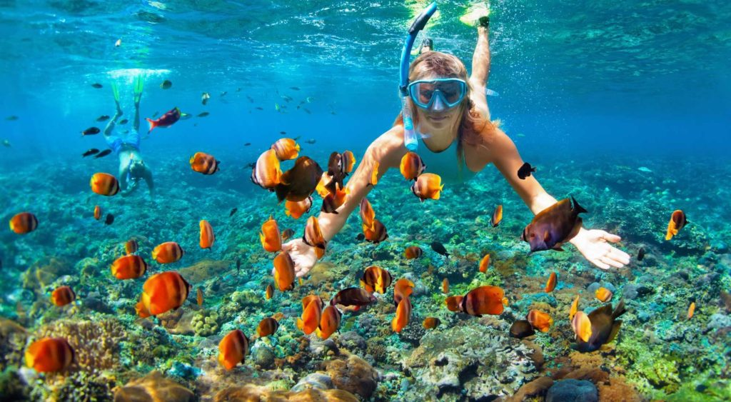 What Is The Difference Between Freediving and Snorkeling?