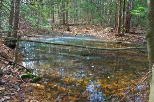 The Vernal Pool - Types Of Wetlands