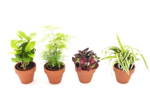 KaBloom Live Plant Collection
