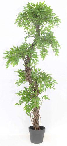 Chic Oriental Indoor/Outdoor - Large Indoor Plants