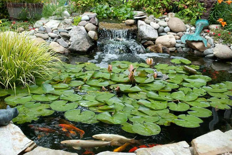 Pond Waterfall Pumps: How To Choose A Good One